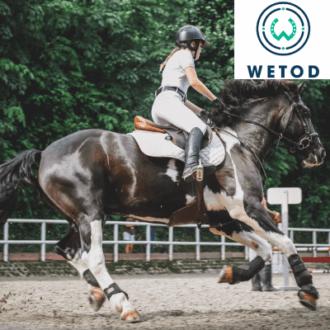 Comprendre les besoins d'un cavalier / Améliorer l'entraînement de son cheval